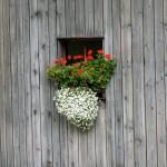 Licht und Lüftung für den Raum: Das Fenster. Foto: Petra Schmidt / pixelio.de . (641041_original_R_K_B_by_Petra Schmidt_pixelio.de)